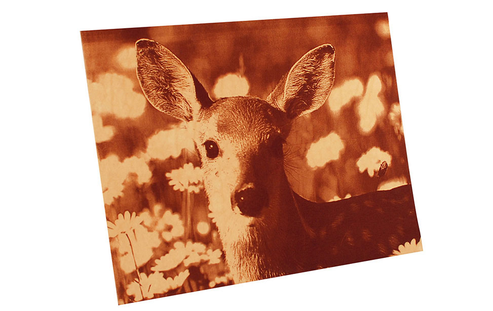 Deer Photo Engraving on Leather
